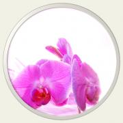 Massage ayurvedique celine dutertre l institut du bien etre 1